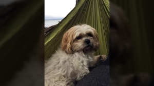 In a Facebook post, a man identifying himself as the attacked dog's owner reported that his small Shih Tzu named Cole was the one killed, calling him 'the sweetest little dog there ever was.' March 24, 2017. (Facebook)
