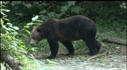Well-wishes pour in for victim of grizzly attack