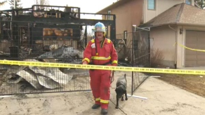 A Calgary Fire Department investigator and a trained dog scour through the debris of the home on Sunvista Way S.E.