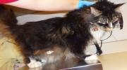 CTV Ottawa: Cat left for dead
