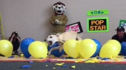 Toby, a Whippet, sets balloon-popping record