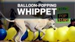 Calgary pup breaks world record