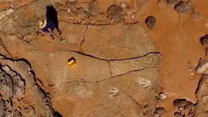 Dinosaur tracks in Australia