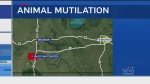 Police investigate animal mutilations in Manitoba