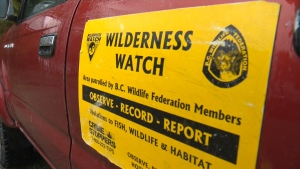 A wilderness watch group says it's received a number of calls from concerned residents after a pair of wolves were seen at least four times near hobby farms. Mar. 28, 2017 (CTV Vancouver Island)