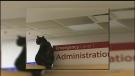 Sawatsky Sign-Off- Hospital Cat