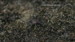 CTV Montreal: Trending: Spiders eat
