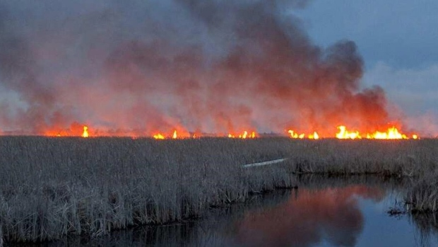 Point Pelee Fire