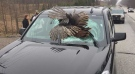 A New Jersey family travelling through northern Indiana got a shock when a 30-pound turkey crashed through their vehicle's windshield. (Facebook/La Porte County Sheriff's Office)