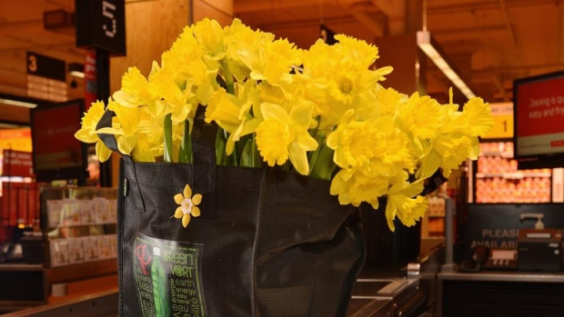 Daffodil Month CCS