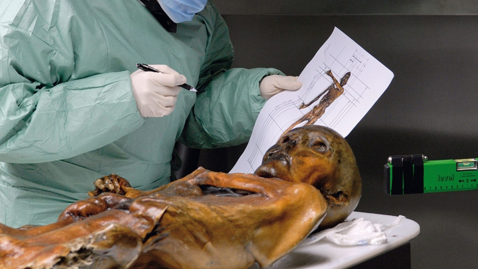 "A scientist examines the remains of the ""Iceman"" mummy. (South Tyrol Museum of Archaeology/EURAC/Samadelli/Staschitz)"