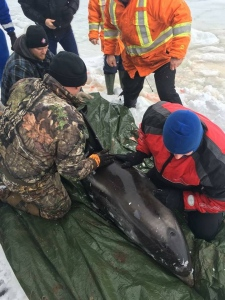 dolphin, whale rescue in N.L.