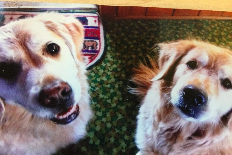 Lori McCall says she lost two Golden Retrievers to antifreeze poisoning. (Courtesy GoFundMe)