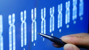 Participants with the longest telomeres were found to have 33 per cent higher odds of developing any cancer than those with the shortest telomeres. © fotohunter / Istock.com