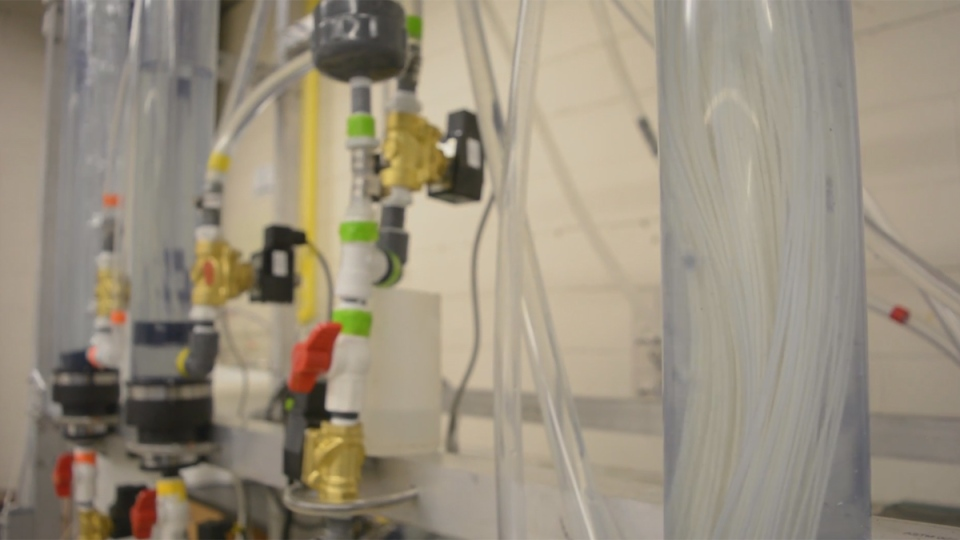 The UBC invention is seen filtering water in this image from video. (source: UBC / HO)
