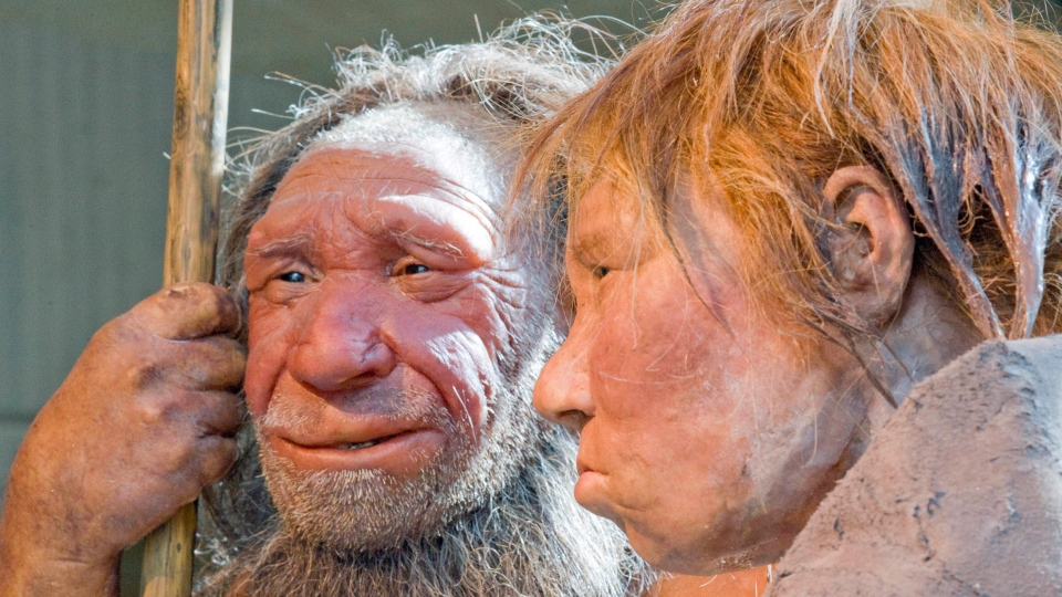 This Friday, March 20, 2009 file photo shows reconstructions of a Neanderthal man named 'N', left, and woman called 'Wilma,' right, at the Neanderthal museum in Mettmann, Germany. (AP / Martin Meissner)