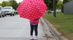 A rainy day in Windsor, Ont., on Sept. 29, 2016. (Melanie Borrelli / CTV Windsor)