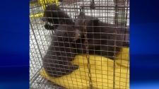 Bear cubs found in bathroom