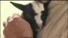 Sawatsky Sign-Off- Goat Cuddling