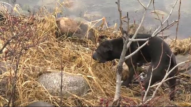 Simon Chance's dog Asia had a close call when it fell through a pond's ice on the weekend while it was chasing a goose.