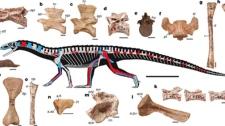 The earliest bird-line archosaurs