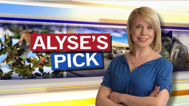 Used Tires Barrie >> Alyse's Pick of the Day   CTV Atlantic News