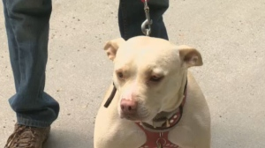 A new bill would give the Quebec government the authorization to ban certain breeds and races of dogs that are deemed dangerous.