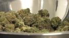 CTV News: Frist step to marijuana legalization
