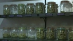 Sask. reacts to federal pot bill
