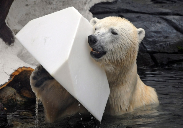 Polar bear dies unexpectedly at SeaWorld San Diego