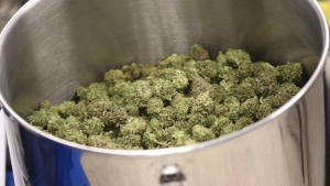 Cured flowers of cannabis intended for the medical marijuana market are seen at a licensed producer facility in Moncton, N.B., on April 14, 2016. (THE CANADIAN PRESS/Ron Ward)