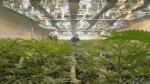 CanniMed expanding Saskatoon plant