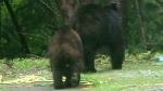Bear sightings prompt warning in Nanaimo