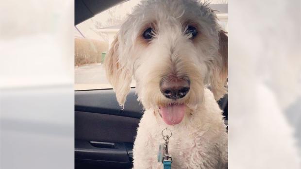 missing dog Cooper