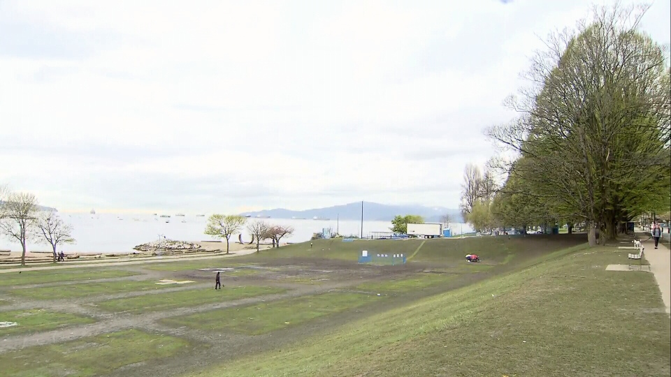 "The fields around Sunset Beach will be closed for upwards of four weeks after they were left a ""muddy mess"" following a massive marijuana rally on April 20, 2017. (CTV)"