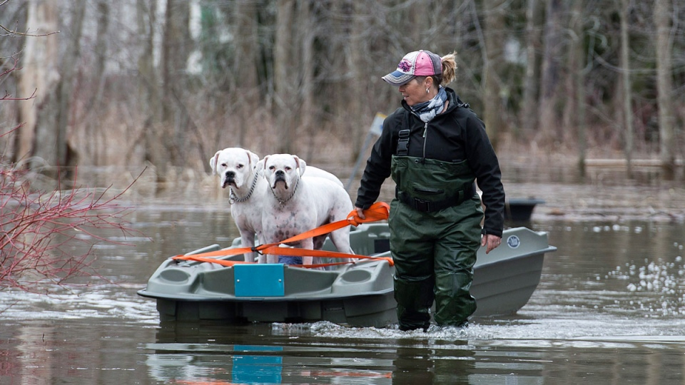 Hillary Porter pulls her dogs along in a boat in the town of Rigaud, Que., west of Montreal, Thursday, April 20, 2017, following flooding in the area. (THE CANADIAN PRESS/Graham Hughes)