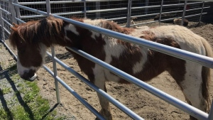 Animals seized from Mission farm