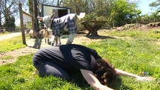 Saanich farm offering goat yoga classes