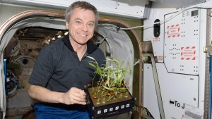 Canadian astronaut Bob Thirsk holds plants while on board the International Space Station in this handout photo. (Canadian Space AgencyTHE CANADIAN PRESS/HO)