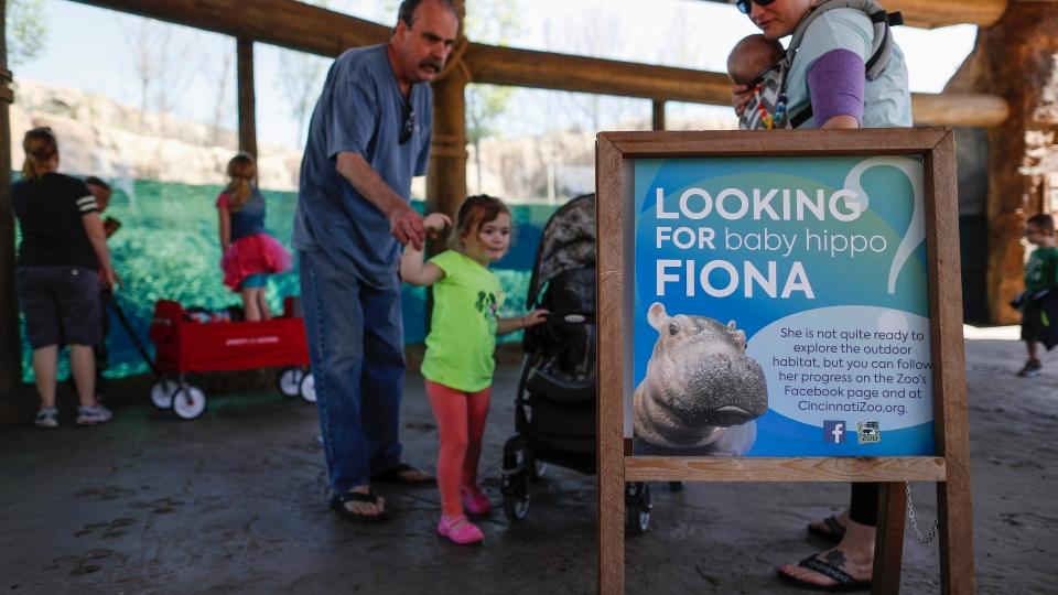 In this Wednesday, April 12, 2017, photo, visitors read a sign depicting Fiona, the Cincinnati Zoo & Botanical Gardens' new baby hippopotamus, as they pass through the Hippo Cove exhibit, in Cincinnati. (AP Photo/John Minchillo)