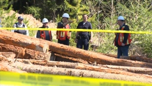 The TSB says the workers will collect data, conduct witness interviews and examine the wreckage. Apr. 21, 2017.