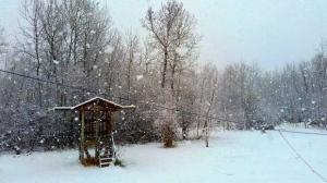 Beautiful large snowflakes in Anola in May. Photo by Sandy W.