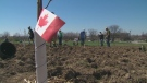 tree planting, Downsview Park