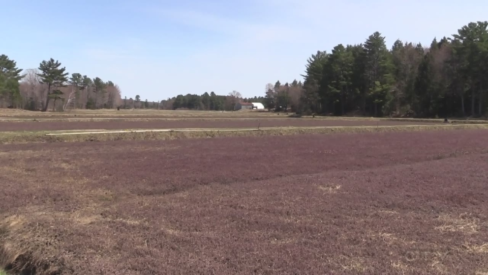 Cranberry grower calls it quits