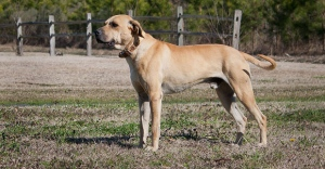 Woodstock Police have issed a warning about a dog similar to this one. (File Photo)