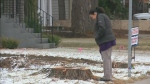 Trees cut down on Sask. Crescent; city investigati