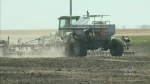 Canola farmland expected to reach record levels