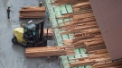 Workers sort and move lumber at the Delta Cedar Sawmill in Delta, B.C., on Friday January 6, 2017. (THE CANADIAN PRESS/Darryl Dyck)
