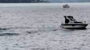 Small boat hits gray whale in Puget Sound