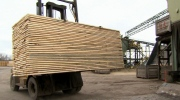 Taxing Canadian timber